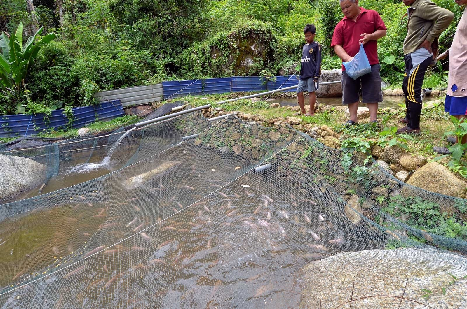Fish farm at Kg Sekam